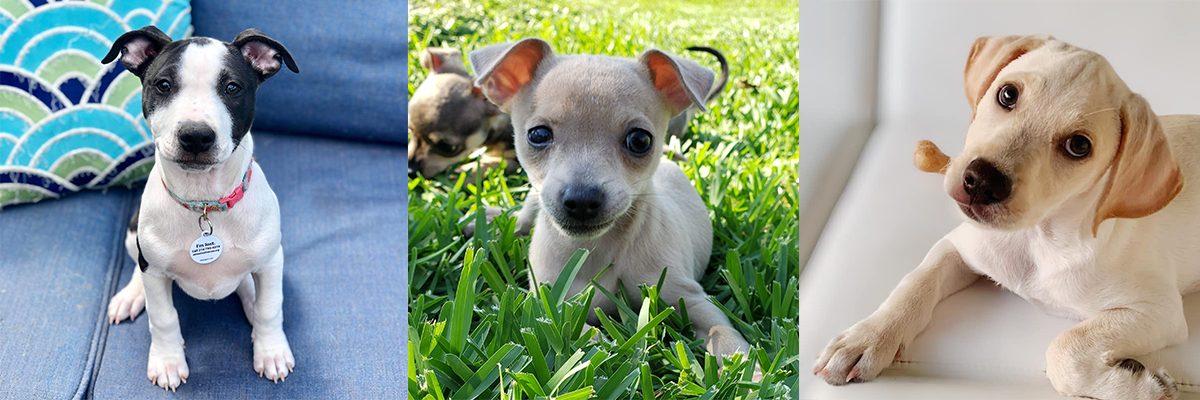 Texas Animal Rescue Team Awarded Samsung Community Impact