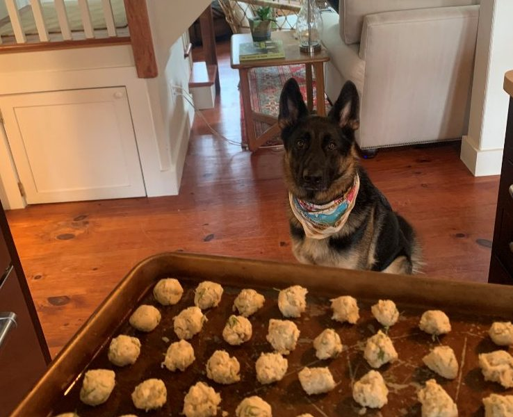 A German Shepherd Dog and His Homemade Treats